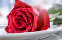 Table setting for valentines or wedding day with red roses. Romantic table setting for two with roses plates cups and cutlery.  Royalty Free Stock Photos