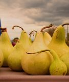 A table of soft squash under and overcast autumn sky Stock Images