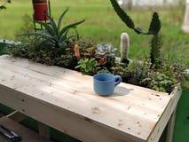 table succulente avec du bois de belanda de jati image stock