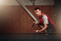 Table tennis, male player with racket and ball. Ping pong training indoor Royalty Free Stock Images