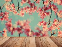 Table top over pink cherry blossoms flower in full bloom. Empty wooden table top over pink cherry blossoms flower in full bloom, spring season, vintage filter Royalty Free Stock Photography