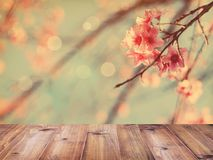 Table top over pink cherry blossoms flower in full bloom. Empty wooden table top over pink cherry blossoms flower in full bloom, spring season, vintage filter Stock Photos