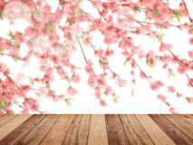 Table top over pink cherry blossoms flower in full bloom. Empty wooden table top over pink cherry blossoms flower in full bloom, spring season, vintage filter Royalty Free Stock Images