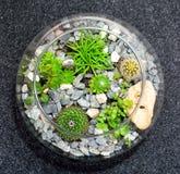 Table top plant decorative garden Stock Photography