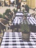 Tableau avec le pot de fleur dans un café confortable Photo stock