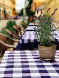 Tableau avec le pot de fleur dans un café confortable Photographie stock libre de droits