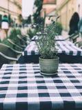 Tableau avec le pot de fleur dans un café confortable Images libres de droits