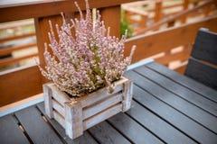 Tableau en bois sur le patio, terrasse avec la composition en automne avec la bruyère dans un panier Composition d'automne Table  photographie stock
