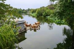 Tableau et chaises sur la plate-forme planked au-dessus du lac Photographie stock libre de droits