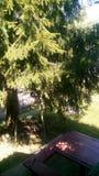 Tableau sous l'arbre Photos stock