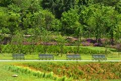Tableaux avec des chaises en parc vert Photo stock