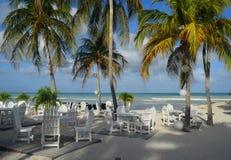 Tableaux blancs avec des palmiers sur une plage dans Aruba Images libres de droits