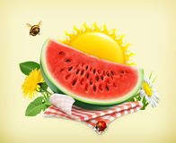 Tablecloth and sun behind, grass, flowers of camomile and watermelon Stock Photography
