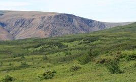 Tableland-Berge in Neufundland stockbilder
