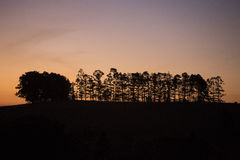 Tableland Sunset. Sunset on the Atherton Tableland with Bunya pines silhouetted on the horizon. Canon5D MkIII Stock Photo