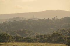 tablelands Stockfoto
