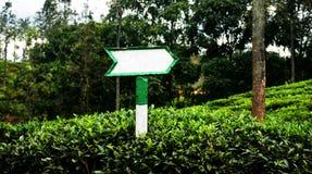 Tablero de dirección en campo del té imagen de archivo libre de regalías