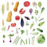 Tablero de los cliparts vegetales orgánicos de la acuarela pintada a mano ilustración del vector