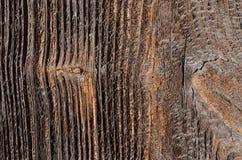 tablero de madera anticuado con las manchas marrones y las cavidades imágenes de archivo libres de regalías
