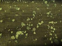 Tablero de madera antiguo con el musgo y el liquen Fotos de archivo