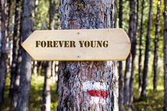 Tablero de madera de la muestra en el bosque Tablero de dirección con la muestra de los jóvenes del forever Imagen de archivo libre de regalías