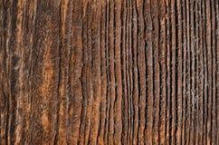 tablero de madera utdated con las manchas marrones y las cavidades de descoloramiento fotos de archivo libres de regalías