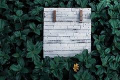 Tablero de madera vacío rústico del grano blanco para escribir licencia de la naturaleza del verde del fondo de la nota imagenes de archivo