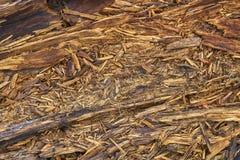 Tableros de madera putrefactos Imagen de archivo libre de regalías