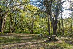 Tables At Dash Point. Tables sit under trees at Dash Point State Park in Washington State royalty free stock photos