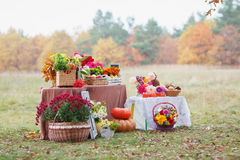 Tables decorated with autumn fruits and flowers Royalty Free Stock Photography