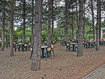 Tables In Pines Stock Photos