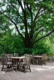 Tables under Big Tree Stock Photography