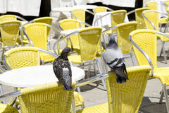 Tables vides de café de trottoir avec deux pigeons Image stock
