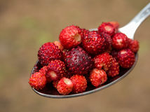 Tablespoon red strawberries closeup royalty free stock photography