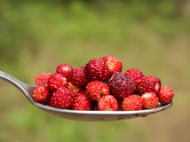 Tablespoon red strawberries closeup royalty free stock photos