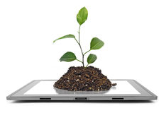Tablet. Computer isolated on the white backgrounds. tree Stock Photography