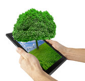 Tablet. Computer isolated on the white backgrounds. tree Stock Images