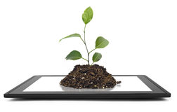 Tablet. Computer isolated in a hand on the white backgrounds. tree Royalty Free Stock Photos