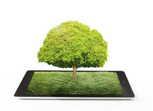 Tablet computer and tree on it Royalty Free Stock Images