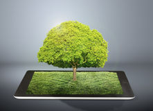 Tablet computer and tree on it Royalty Free Stock Photo
