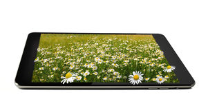 Tablet with field of marguerites. On it isolated on white Royalty Free Stock Photos