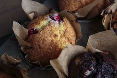 Home Made Cranberry Chocolate Muffins royalty free stock image