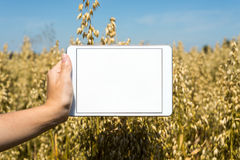 Tablet held by hand in oat field Royalty Free Stock Images