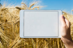 Tablet held by hand in oat field Royalty Free Stock Photos
