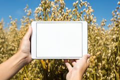 Tablet held by hands in oat field Stock Photography