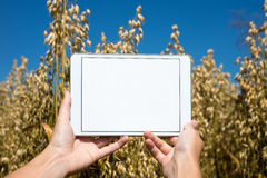 Tablet held by hands in oat field Royalty Free Stock Photo