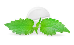 Tablet with mint(0).jpg Stock Image