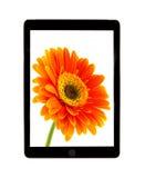 Tablet mit Blumengänseblümchen Stockfoto