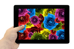 Tablet PC in hand with mix collage of rose flowers rainbow background on screen isolated. On white Stock Photo