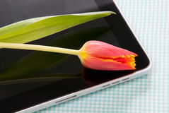 Tablet touch with tulip Stock Image